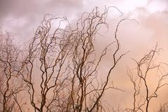 Bare tree branches Stock Photos