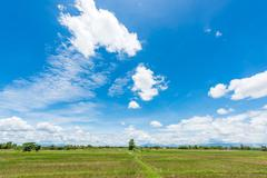 Rice Fields before farming with blue sky - stock photo