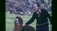 1977: Man petting llama Saksaywaman Inca ruins clowning around on sacred ground. - stock footage