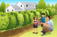 Father Kids Harvesting Blueberry Stock Illustration