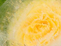 abstraction with delicate yellow rose - stock photo