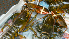 Lobsters for sale in the china town fish market in New York City Stock Footage