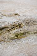 Crocodile in river, costa rica - stock photo