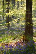 morning sunshine in spring flowering forest - stock photo