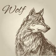 Wolf design. Animal concept.Wildlife animal, vector illustration Stock Illustration