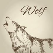 Wolf design. Animal concept.Wildlife animal, vector illustration - stock illustration
