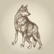 Wolf design. Animal concept.Wildlife animal, vector illustration - stock illustration