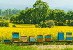 Colorful Wooden Apiaries and the Rapeseed Fields in Malopolska Region, Poland - stock photo