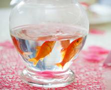 Goldfish in ampule used as centerpieces Stock Photos