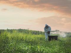 Beekeeper inspects bee hive in field - stock photo
