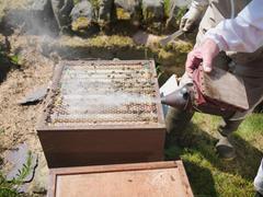 Opened bee hive Stock Photos