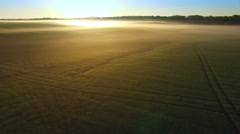 Sunlit ground fog blankets a valley field of wheat - stock footage