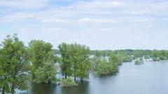 Flood river flow, spilled  forest trees after big thunderstorm Stock Footage