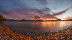 Spectacular Sunrise At That Wanaka Tree. Time Lapse - stock footage