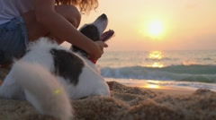Summer Vacation - Woman with Dog on Beach at Sunrise Stock Footage