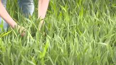 Farmer checks cereal, wheat before harvest time Stock Footage
