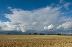 Field of barley in stormy skies Stock Photos
