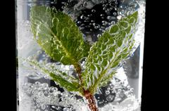 Fresh mint leaves and bubbles in a gin and tonic - stock photo