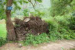 China, guangxi province, yangshuo, bundles of sticks - stock photo
