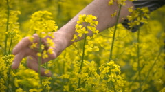 Male Farmer in Oilseed Rapeseed Cultivated Agricultural Field Examining Canola Stock Footage