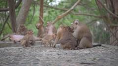 Monkey family life - stock footage