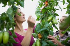 Farming vegetables and fruits Stock Photos