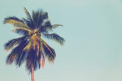 Coconut palm tree and blue sky vintage with space. Stock Photos