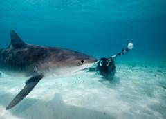 Photographer and Tiger Shark. Kuvituskuvat