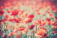 Vintage toned poppy flowers, artistic background. - stock photo