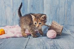 Grey striped kitten at blue wood Stock Photos