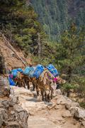 Donkeys - stock photo