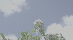 Shot of lush spring garden foliage in a gently blowing morning breeze Stock Footage