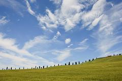 Cypress trees near Siena, Tuscany, Italy - stock photo