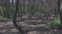 Drone flying through a crooked forest - shot01 - FLAT Stock Footage