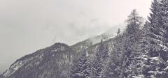 Snowy Alpine Peaks Covered with Evergreen Forest - stock photo