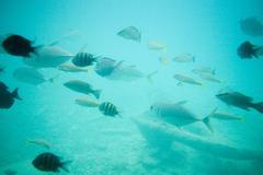 Fish in sea, Curacao, Antilles Stock Photos
