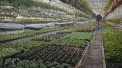 Worker watering flowers in 4K - stock footage