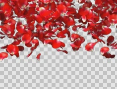 Rose petals transition from top to bottom Stock Footage