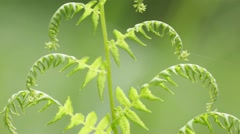 fern  leaf in the wind - stock footage