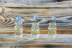 Forget-me-nots in small jars on a wooden table authentic Stock Photos