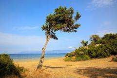 Alone tree near sea - stock photo