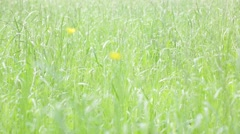 Background of grass in the wind Stock Footage