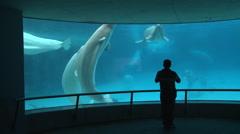 Tourisme Ontario tourist aquarium Stock Footage
