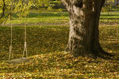 Maple tree with swing, Quebec, Canada - stock photo