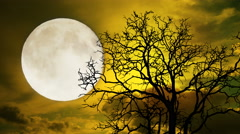 Timelapse Dramatic sky with tree, full moon and clouds - stock footage