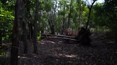 Florida Woods POV With Glidecam - stock footage