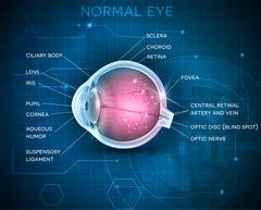 Eye anatomy Stock Illustration