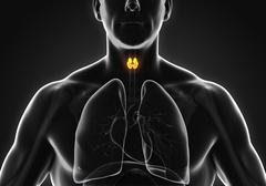 Human Thyroid Gland Anatomy - stock illustration