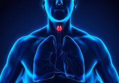Human Thyroid Gland Anatomy Stock Illustration