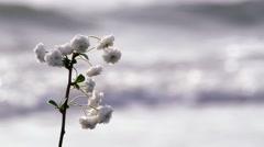 Flower on sea Stock Footage